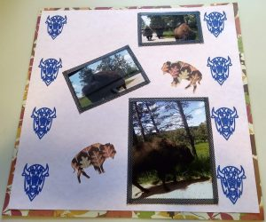 Scrapbook Page about the Buffalo Stampede I was a part of on vacation