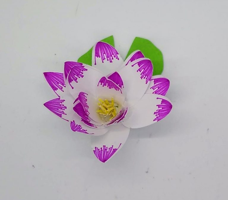 the paper water lily or lotus flower